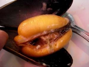 Meaty Mussels